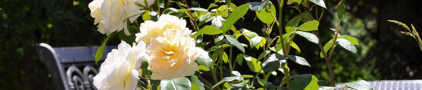 Impressum | Gartenfreunde Oberschwaben e.V.